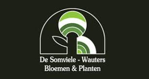 Bloemen en planten De Somviele